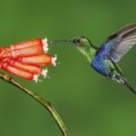 colibrí alimentandose