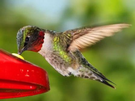 alimentador colibrí