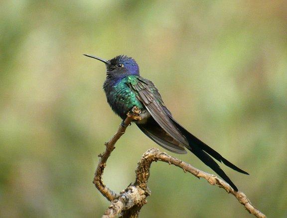 Colibrìes, la belleza hecha ave